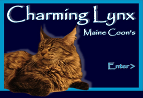 Charming Lynx – Maine Coon Rassekatzen